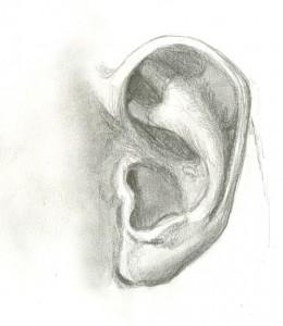 Ear sketch - Michelle Davis Ear Sketches