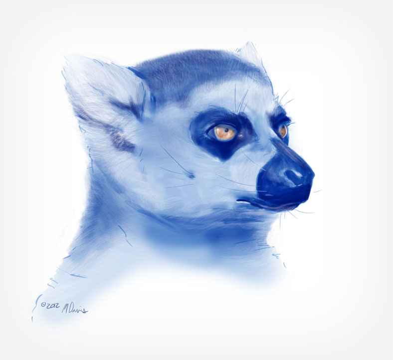 Lemur sketch 1 by Michelle Davis