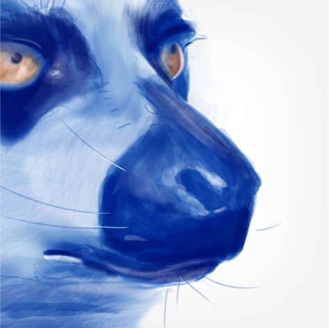 Lemur face sketch zoom by Michelle Davis