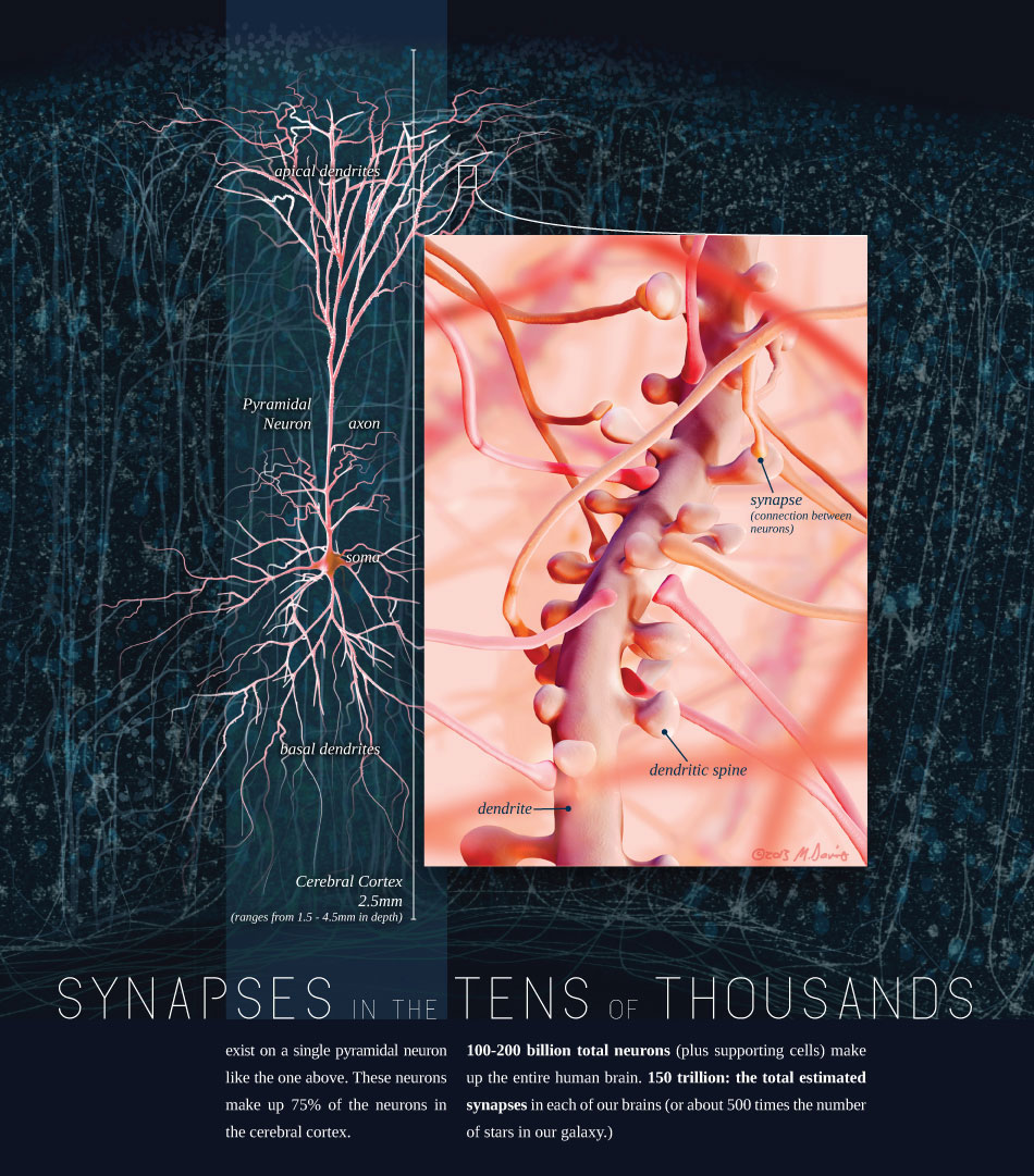 Synapses Illustration by Michelle Davis