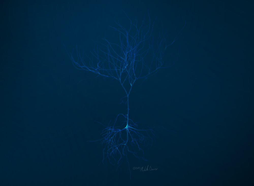 image of whole render neuron study by michelle davis