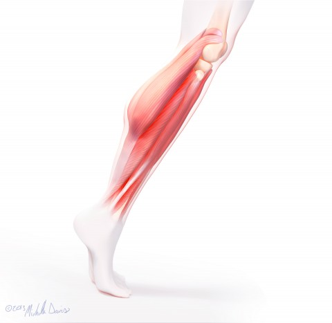 image of leg muscle study by michelle davis