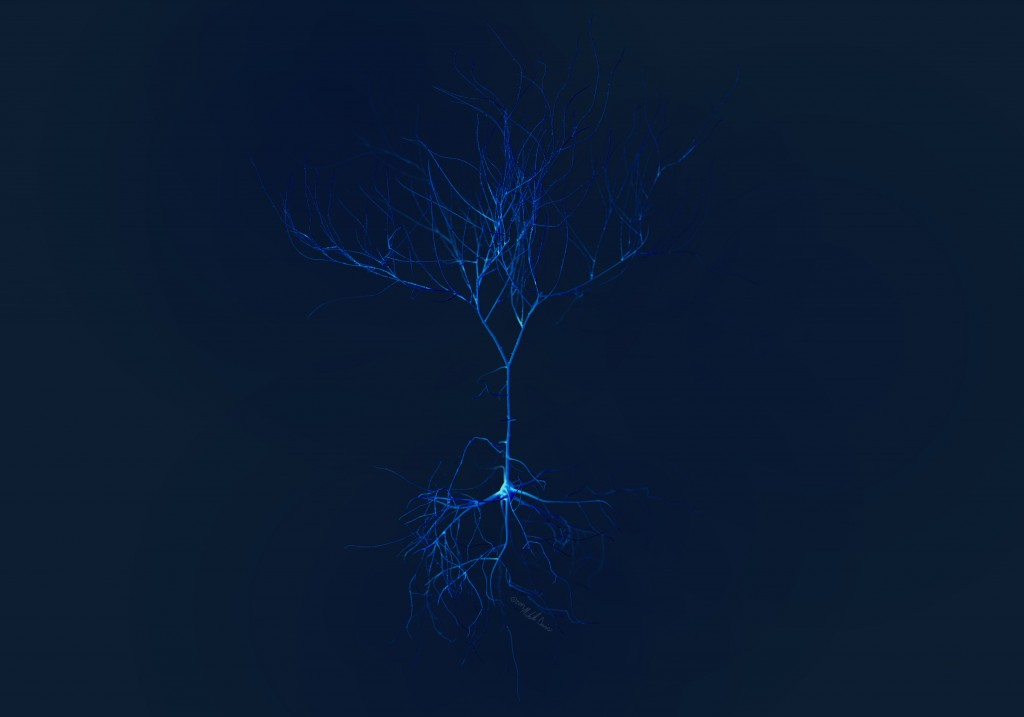 image of pyramidal neuron study in zbrush by michelle davis